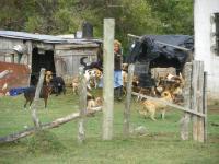que devuelvan los perros de ana
