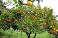 Plantar Arboles Que Den Frutos.