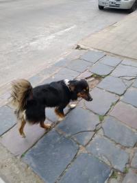 Para Adoptar Al Perro De Olavarria