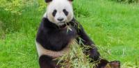 Petición Contra Zoológicos