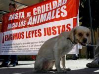 Para Q Sean Castigados Los Responsables Del Maltrato Animal