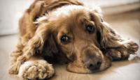 Rescatar A Turco, Un Perro Maltratado De Parque Patricios