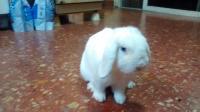 Para Cumplir El Sueño De Carmela De Cuidar El Conejo