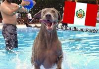 Parque Acuático Para Perros En Perú